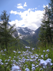 Looking up (Aosta Writing Workshop 2015)